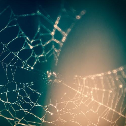 LSI Web